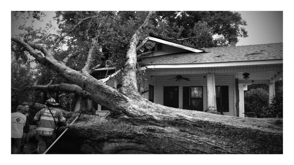 LA182 Tree Fall